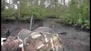 hog hunt 2008 head shot - tough pig