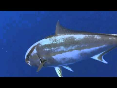 Paul Csige: Underwater Videographer