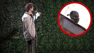Wild Raccoon Crashes My Comedy Show