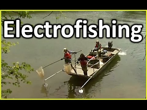 Electrofishing Boat | electrofishing boat how it works? | boat system safety, electric fishing video