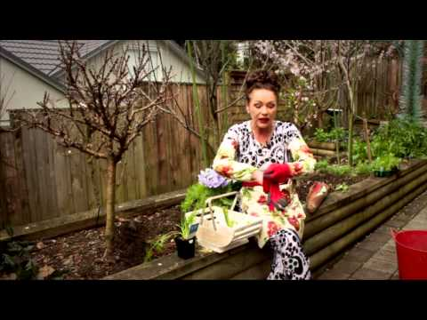 Gardening Tutorial: Vegetables - How to Grow Fennel