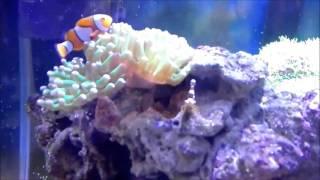 Морской аквариум (клоуны, креветки)(, 2015-12-30T08:25:53.000Z)