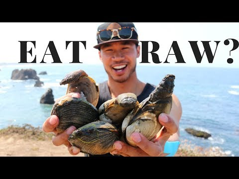 Low Tide Foraging: Catch And EAT RAW Horseneck And Washington Clams
