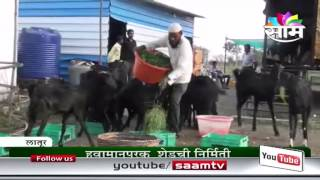 Shaikh Mohsin's goat farming success story