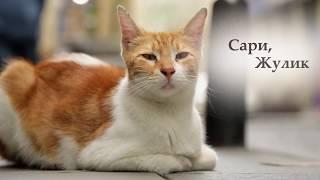 Город кошек: персонаж Сари (Документальный/ США, Турция/ 6+/ в кино с 30 ноября 2017)