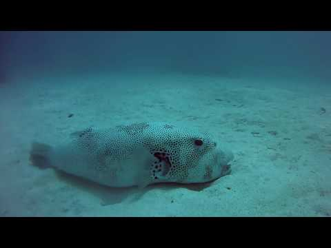 Indonesia, Flores Island, Underwater World (Victor Bogatyrev and Yuliy Lankin)