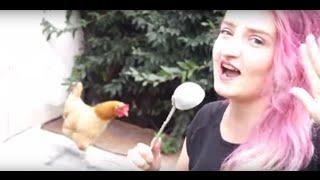 Top Kurczakl [Top Model dla kur]