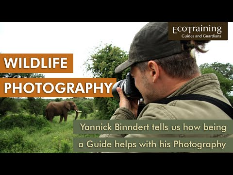 A wilderness Photographer, turned professional Field Guide in Africa
