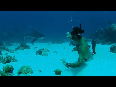 Diving with BIG animals in the most remote (and best) island on earth | Cocos (Keeling) Islands