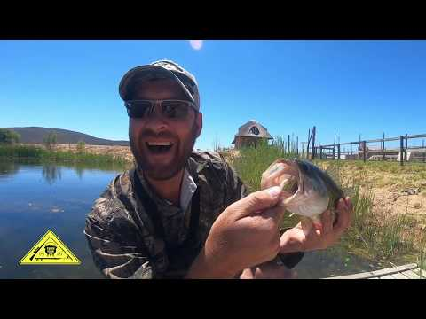 Bass Fishing [Catch Clean Cook] South Africa
