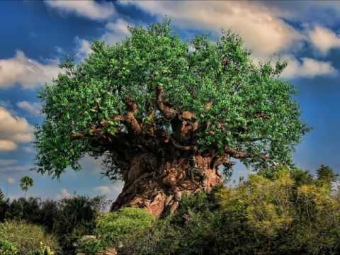 Tree of Life Area Music - Tree of Life