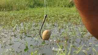 🎣Rohu Fishing|Amazing FISHING Video|Village Fishing|🐟Tilapia Fishing|Village Fishing Video