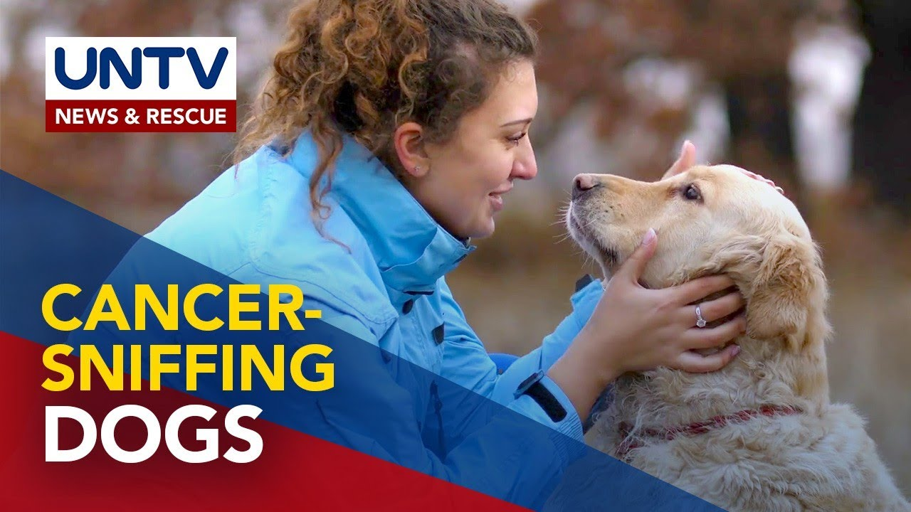 HUWAT Trivia: Cancer-sniffing Dogs