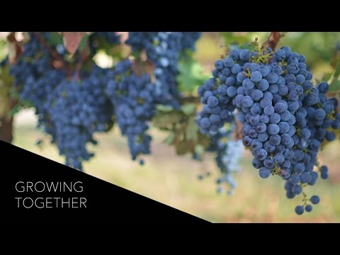 Growing Together: Moldova's Family-Run Et Cetera Winery