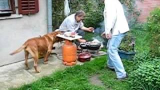 Dogue De Bordeaux Beki And Bbq