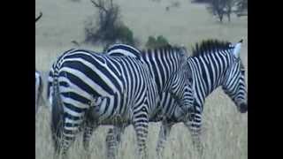Kenia dzika przyroda.mpg