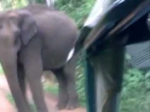 Wild Elephant Attack in Kerala - YouTube