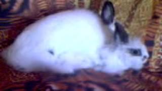Как кончают кролики))))