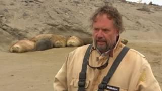 استعانة علماء الأحياء البحرية بحيوان فيل البحر