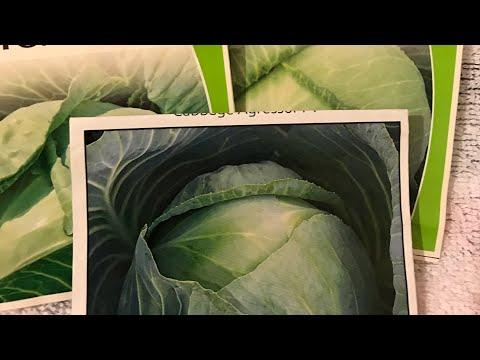 Сею поздние сорта капусты