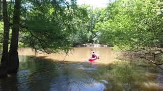 Honey Island Swamp Drone Footage