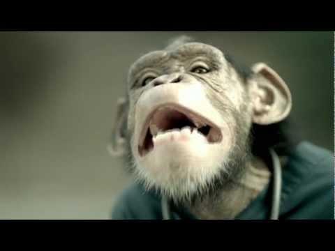"Trunk Monkey - ""Baby"""