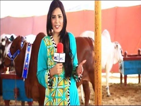 Life Ki Subah 01-Oct-2013  (Karachi Maweshi Mandi)