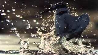 Reasonandu & Adrian Enescu - Peaceful Heart