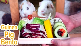 I Made My Guinea Pigs a Bento Box and This Is Their Reaction