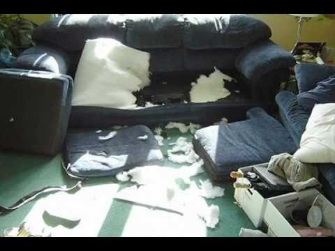 How to Stop Dog Chewing Furniture - YouTube