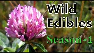 Wild Edibles- Season 1- With Interactive Menu!