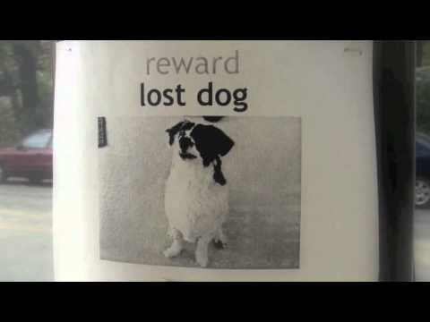 How to Steal a Dog Book Trailer - YouTube