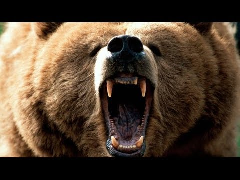 grizzly-bear-roar