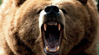 From youtube.com: Grizzly Bear Roar {MID-248072}