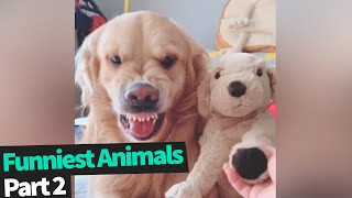 Ultimate Funny Animals Compilation | Funniest Animal Videos 2019 (Part 2)