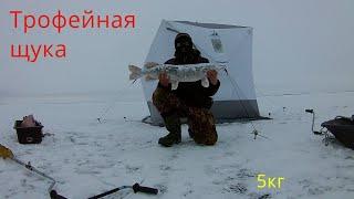 Шок Вот это щука Поймал трофей на 5кг Рыбалка на озере Басановка