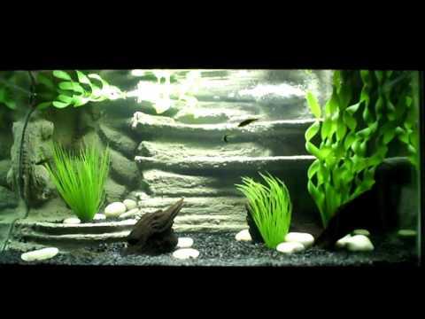 How To Create Natural Looking Aquarium Doovi