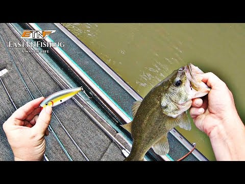 EastTNFishing: August 25th 2019 - Melton Hill Lake - Beaver Creek Part 1