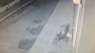 Прикол. Пьяный мужик упал пока ссал.