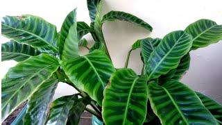 Cuidando das Plantas Usando Detergente