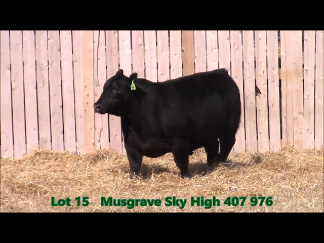 Musgrave Angus Lot 15