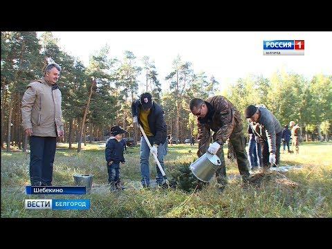 ГТРК Белгород - В Шебекино заложили Аллею Славы