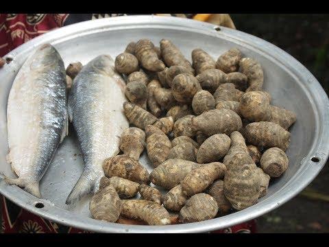 Village Food   Hilsa fish and taro curry recipe   Grandmother recipes-129