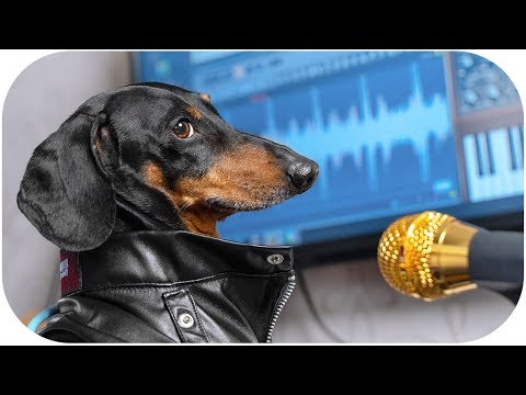 Best song, for best mommy! Cute & funny dachshund dog video!