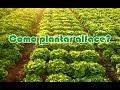 Como plantar Couve e Alface e ajudar o meio ambiente reciclando objetos descartáveis