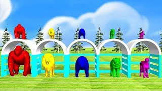Learn colors and learn wild animals names with wild animals for kids,Gorilla,Lion,Tiger,bear,cheetha