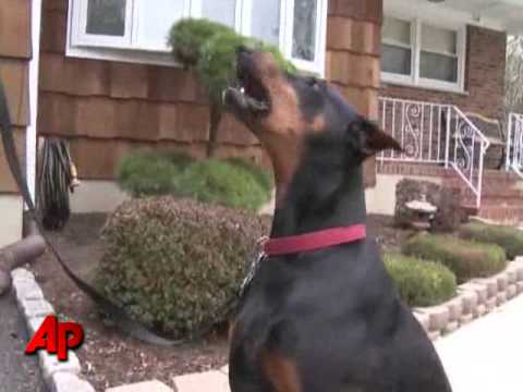 PET CENTRAL -  PET TAILS - New Jersey Town Proposes Fines, Possible Jail Time for Dog Barking