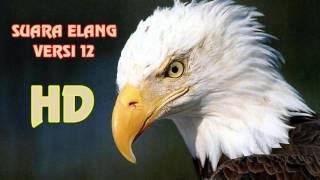Download Suara Masteran Burung Elang Versi 12 Full HD