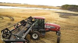 case ih 8010 combine in oats