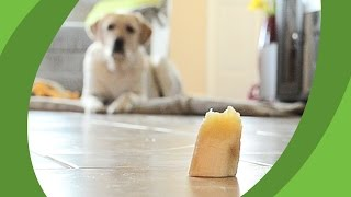 dog eating a banana